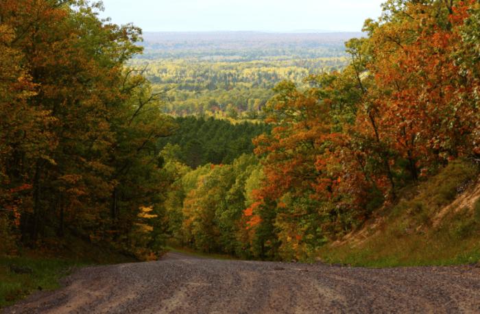 A path leading through a woodland